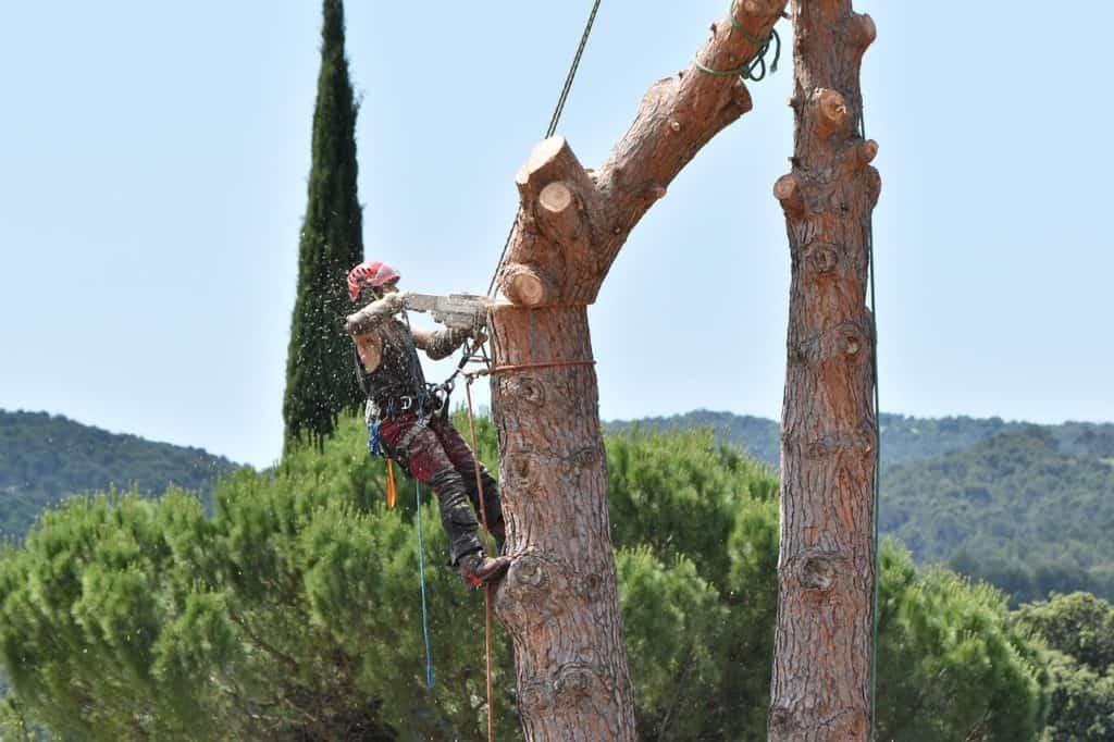 קיצוץ עצים